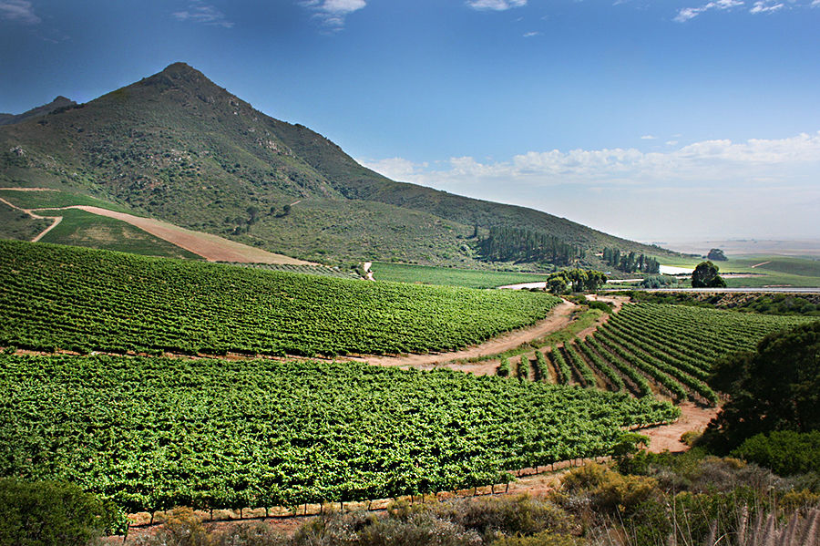 South african swartland winery sold to chinese investor for Jardin winery south africa