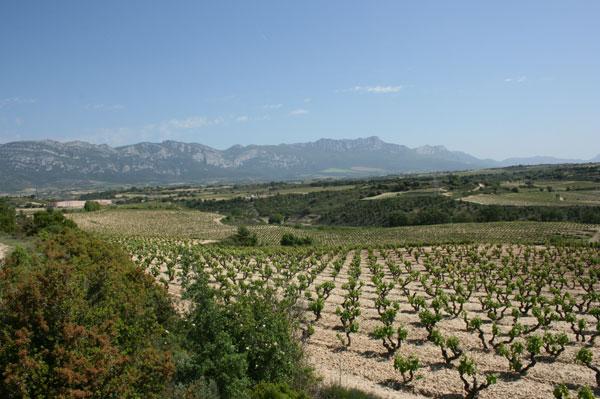 Rioja sales 2013
