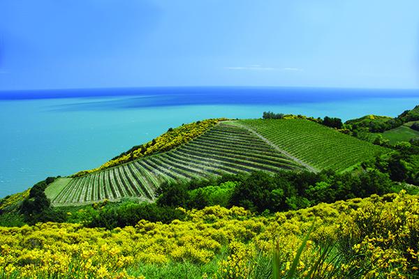 Wine region quiz