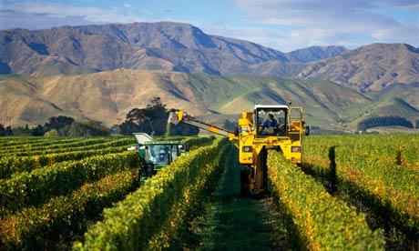 Vineyard New Zealand South Island