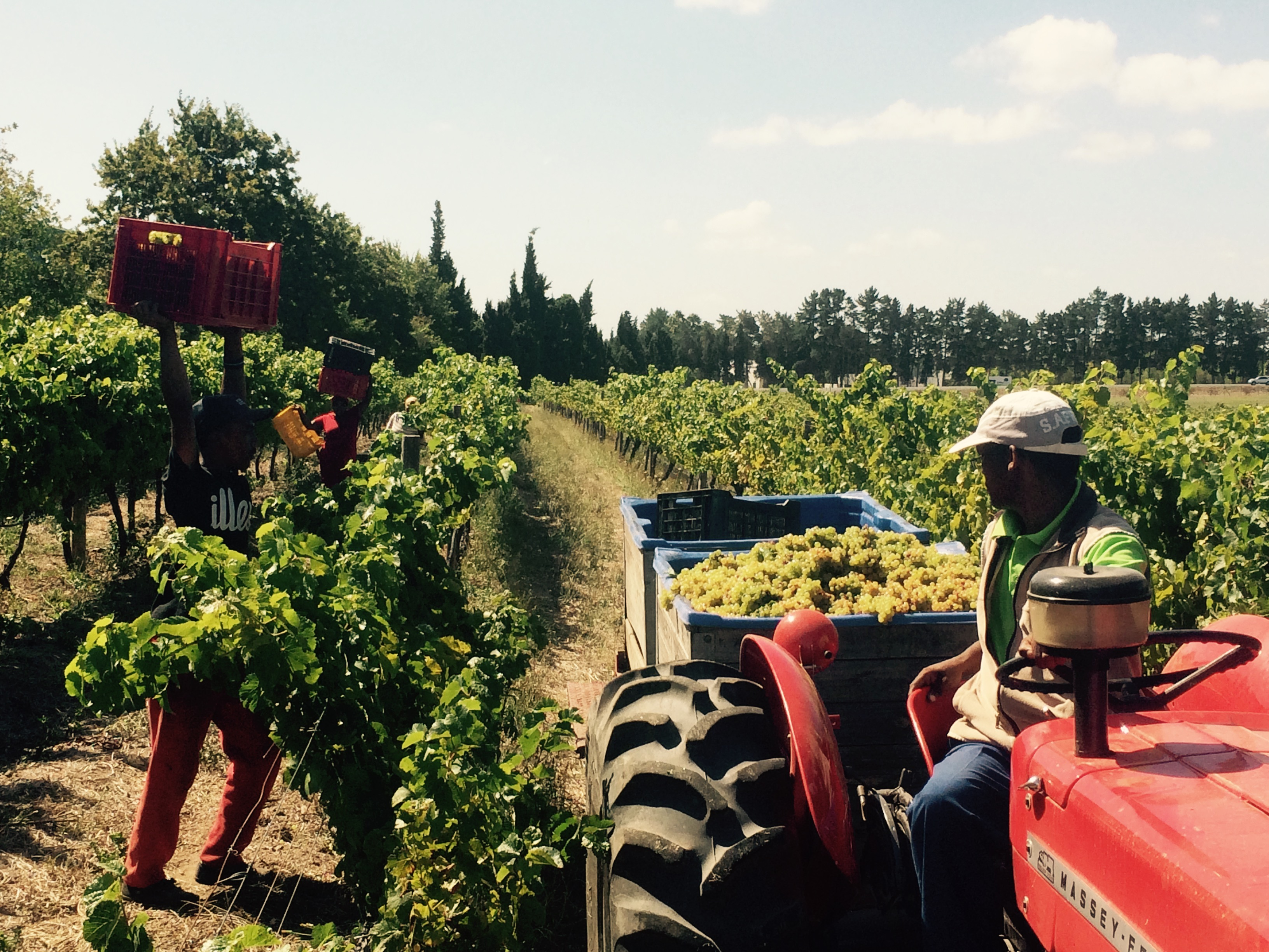 Harvest 2015 south africa winemakers excited by quality for Jardin wine south africa