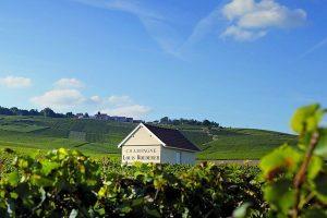 Roederer vineyards, Champagne