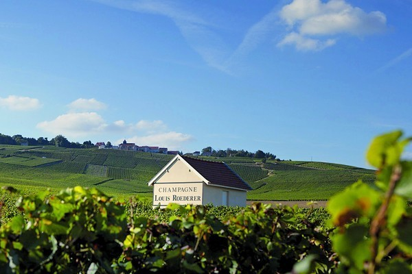 Roederer vineyards, Champagne