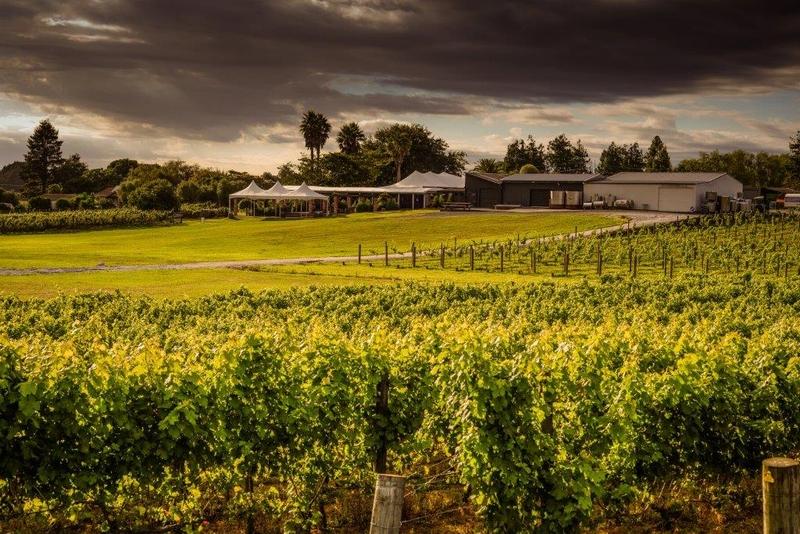Vilagrad winery, Hamilton, New Zealand