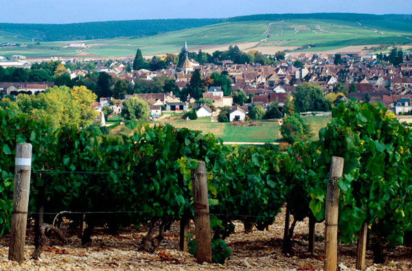 2010 white Burgundy vintage guide