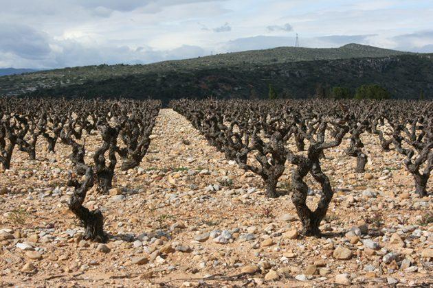 Bushvine Grenache, Roussillon