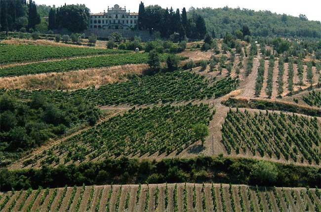 Chianti Classico vineyards in Gaiole