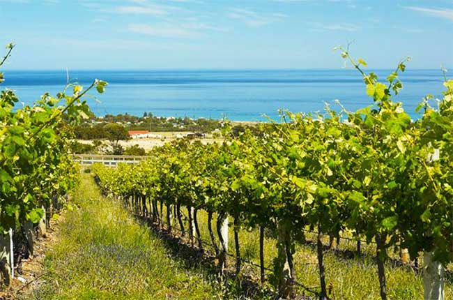 Malibu Coast, California wine