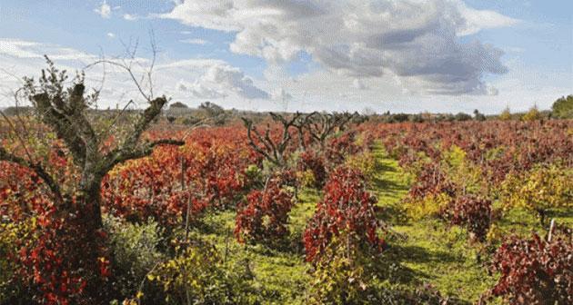 Bairrada vineyards, Portugal