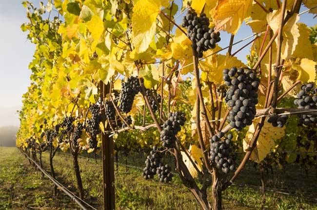 Willamette Valley Vineyards, Oregon, Pinot Noir