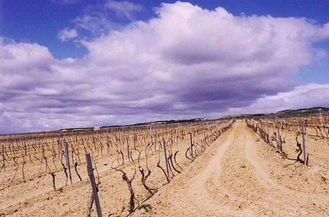 Bardenas desert, Foto viña invierno y Diego