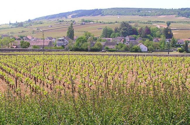 Burgundy 2015, Meursault