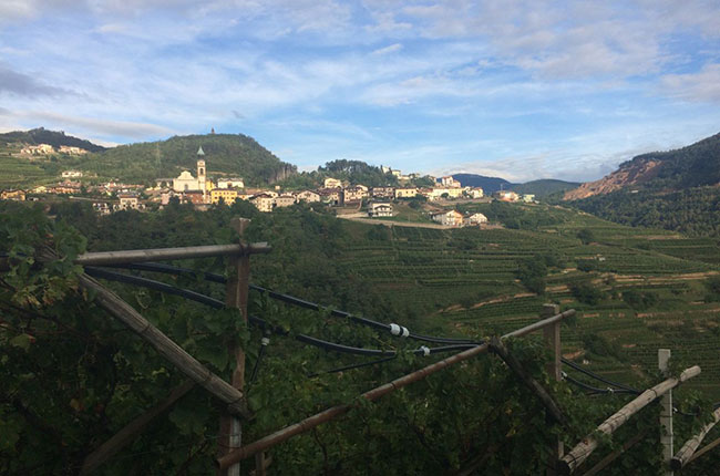 Italy harvest, Trentino