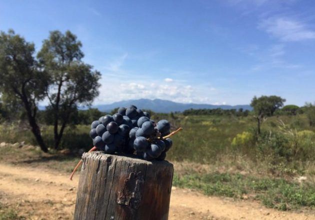 Vinyes Terra Remota