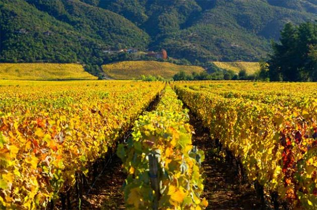 Colchagua Valley, Rapel area, Chile