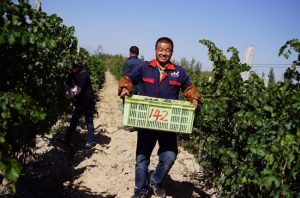 Wine Harvest - Latest Decanter reports
