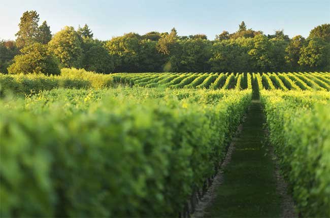 Anson: Cool climate wine hunting - Decanter
