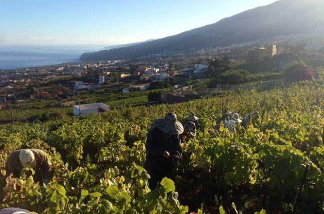 Suertes del Marques, Tenerife wine