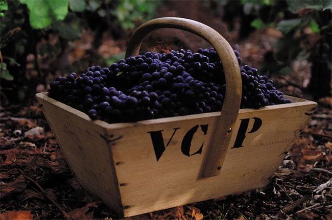 Veuve Clicquot, Pinot Noir grapes