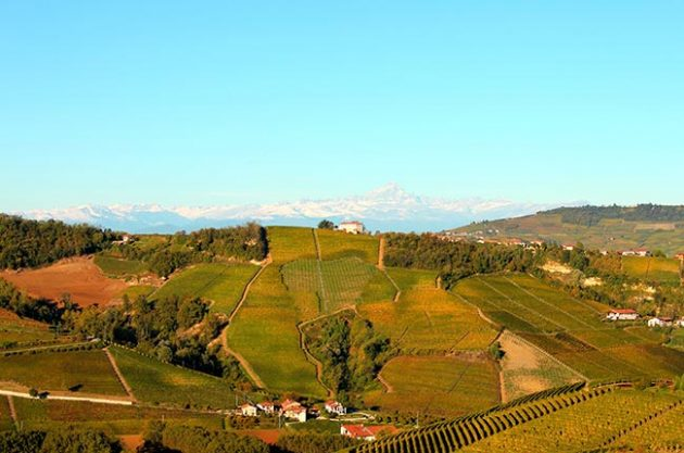 Massolino vineyards in Barolo