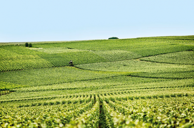 Wine Trails: Champagne houses to visit