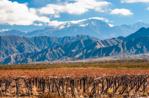 Mendoza travel guide
