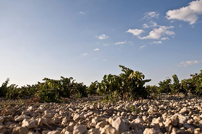 Ribera del Duero vineyards, spanish red wine