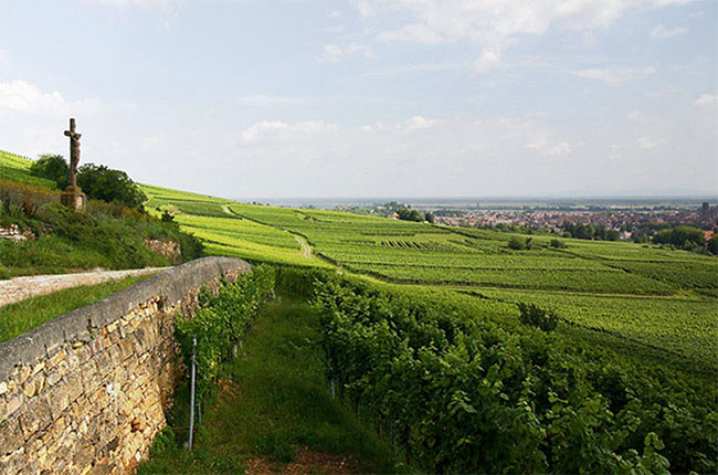 Vorbourg Grand Cru vineyard in Alsace