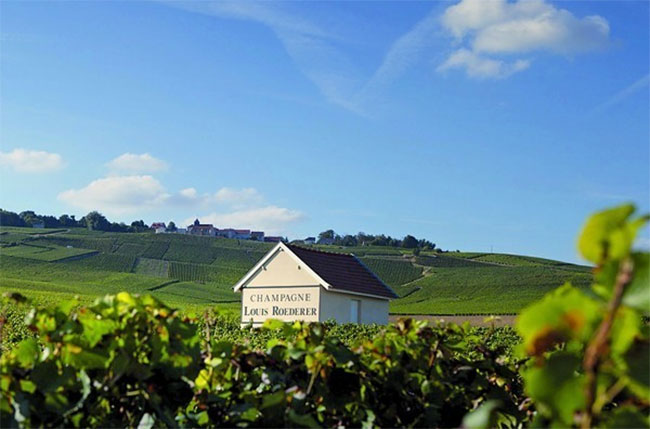 Champagne Louis Roederer vines