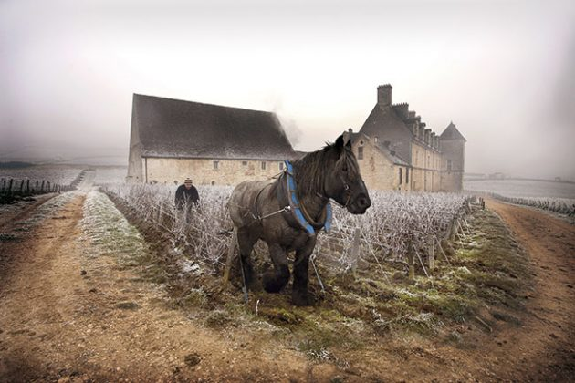 Joy of Terroir January 2015