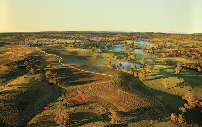 June 2015: Pewsey Vale, Eden Valley, South Australia, Australian wine quiz