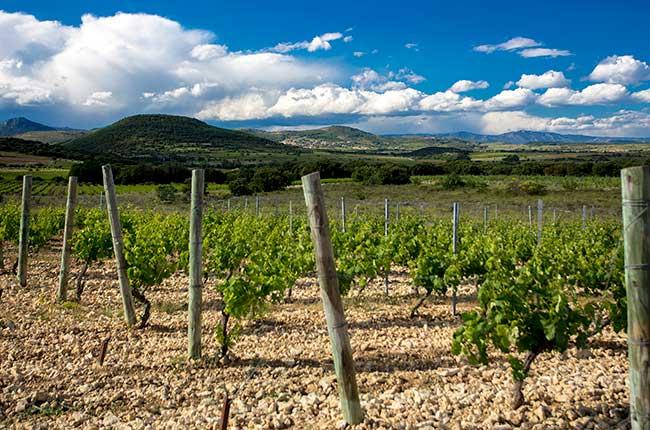 A view across limestone vineyards at St Jean de Bebian, Languedoc
