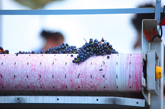 Cabernet Sauvignon and Merlot grapes