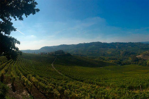 Piedmont wineries