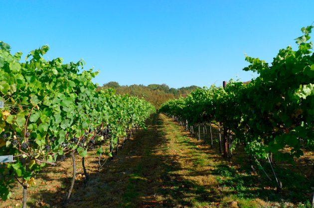 English wine sales, Biddenden Vineyard, Ewan Munro
