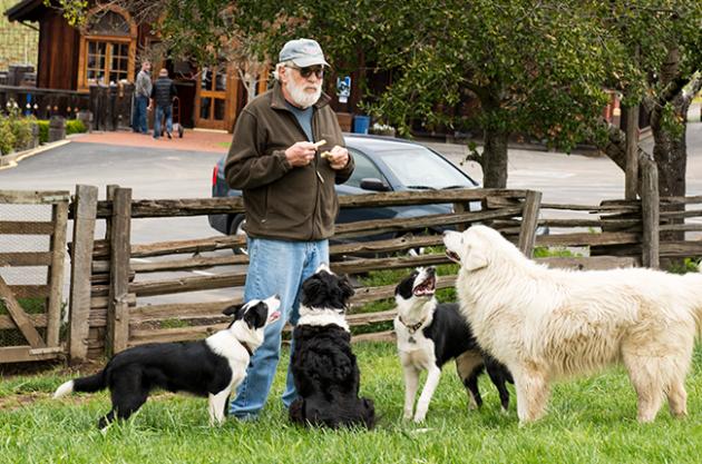 Vineyard animals, Dogs