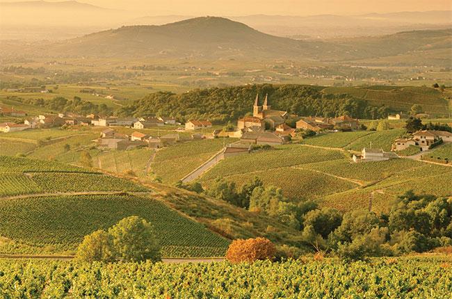 Mâcon vineyards in Burgundy