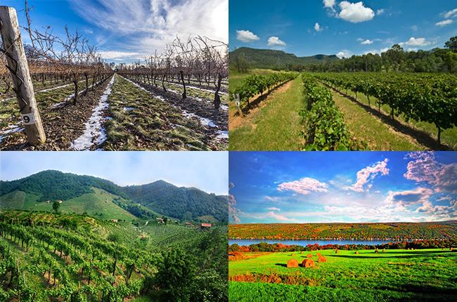 Most googled travel, Wine holidays