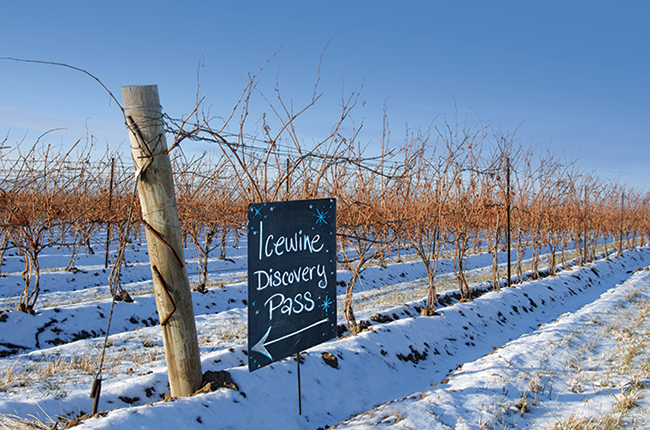 Wine festivals, Niagara Ice Wine festival