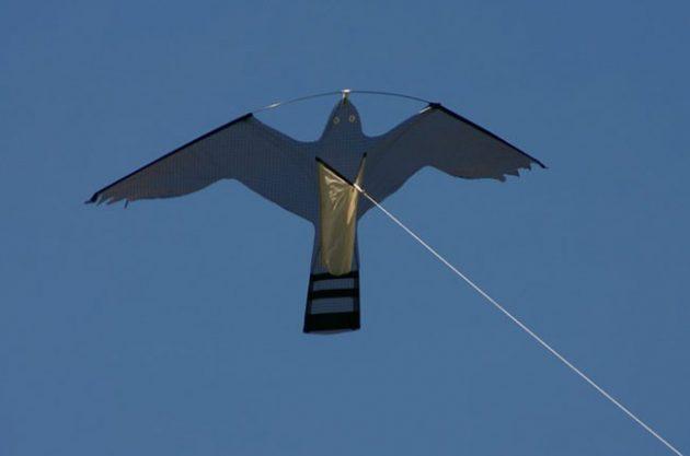 vineyard animals, hawk kite