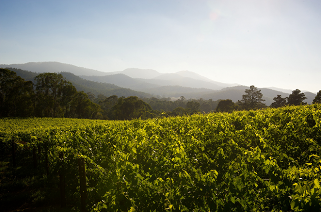 24 hours in King Valley,