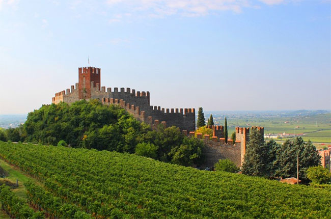 Soave vineyards