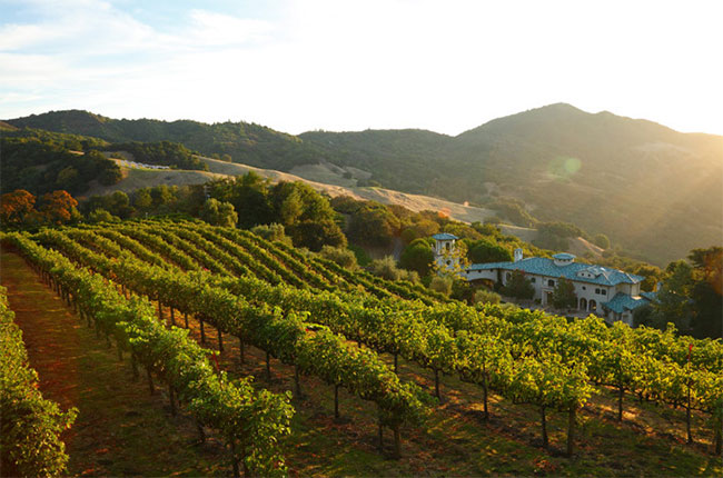 Vines at Villa Sorriso, the Pontet-Canet owner's new estate in Mount Veeder AVA, Napa Valley.