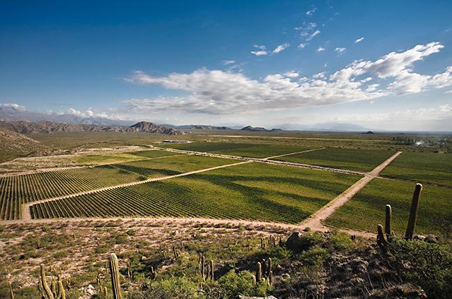 Visiting argentina, Wines of argentina