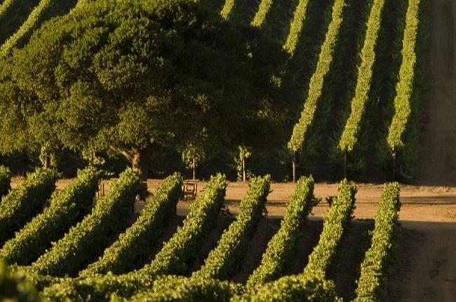 Wine festivals, Casablanca wine harvest