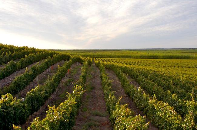 Patagonia wineries, Bodega del Fin del Mundo