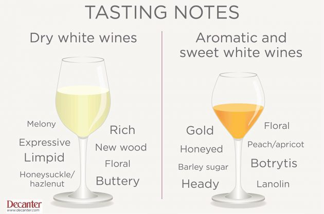 Reading wine tasting notes, Decanter graphic