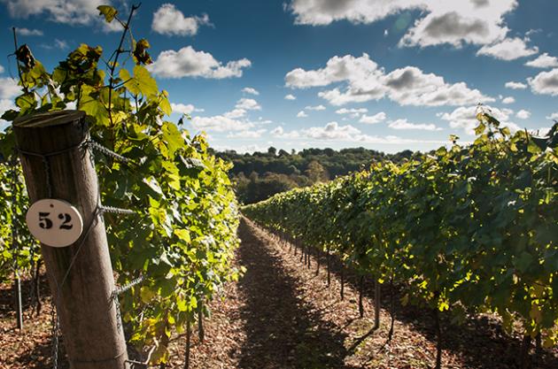 UK climate change, English vineyard
