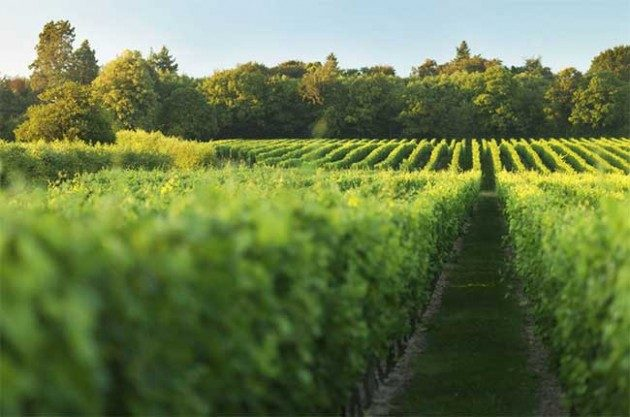 Budget 2016, Nyetimber vineyards