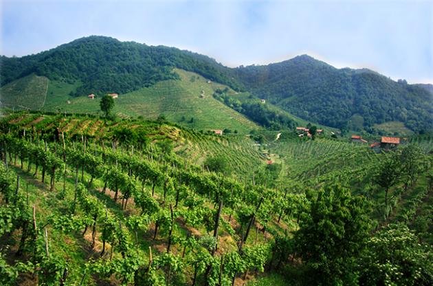 Sparkling wine regions, Prosecco